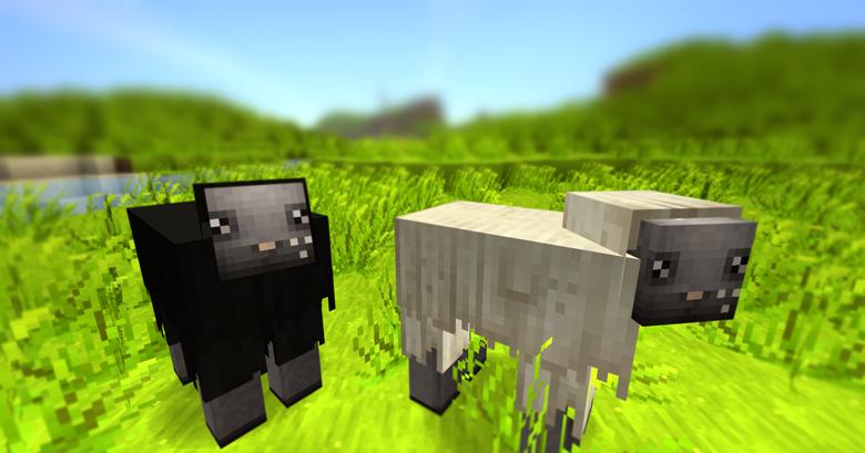 SHEEP_819227
