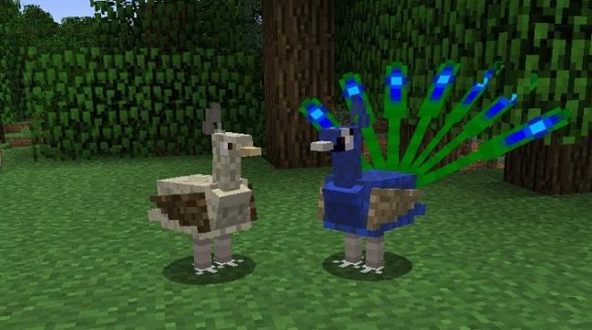 Exotic-Birds-Mod-7.jpg